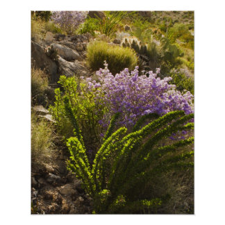 Chihuahuan desert plants in bloom poster