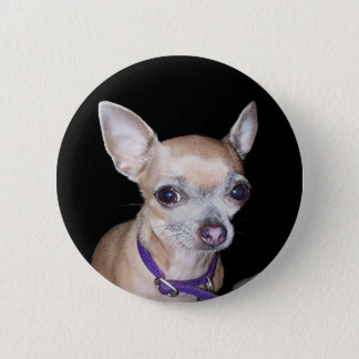 Chihuhahua Looking At You 6 Cm Round Badge