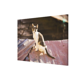 Chile, Valparaiso. Cat on a roof Stretched Canvas Print