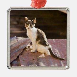 Chile, Valparaiso. Cat on a roof Silver-Colored Square Decoration