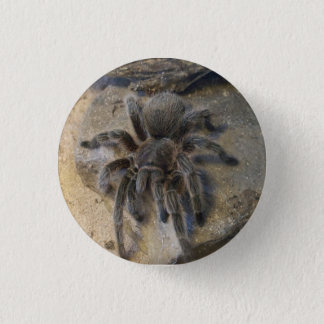 Chilean Rose Hair Tarantula 3 Cm Round Badge