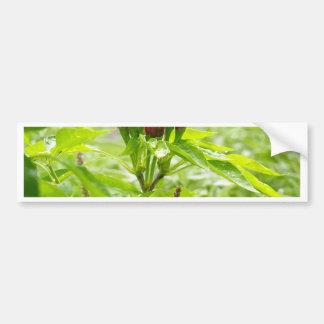 Chili flower bumper sticker