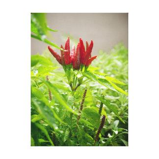 Chili flower canvas print