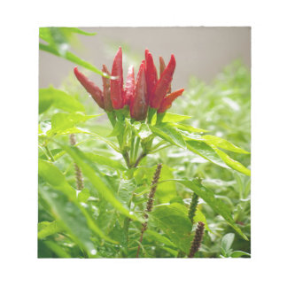 Chili flower notepad