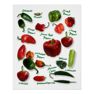 Chili Pepper Varieties Poster