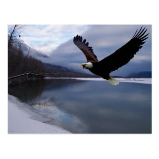 Chilkat Eagle Preserve Postcard