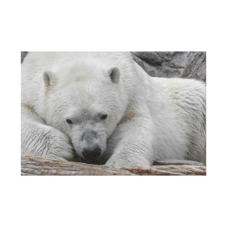 Chill Bear Stretched Canvas Print