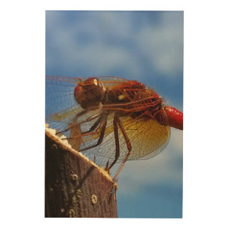 Chilli the Dragonflie Wood Wall Art