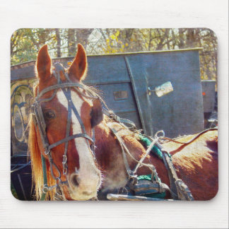 Chilly Morning Amish Horse Mouse Pad