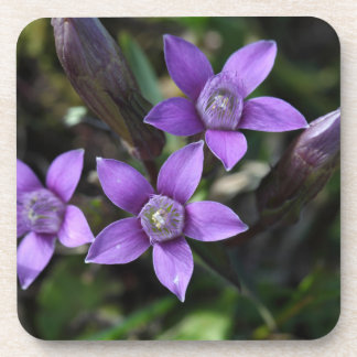 Chiltern gentian (Gentianella germanica) Coaster