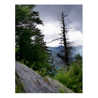 Chimney Tops great smoky mountains Postcard