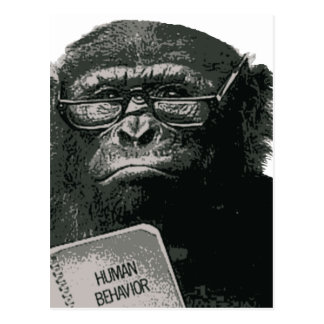 Chimp Reading Postcard