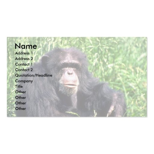 Chimpanzee adult sitting in sunny grass business card templates