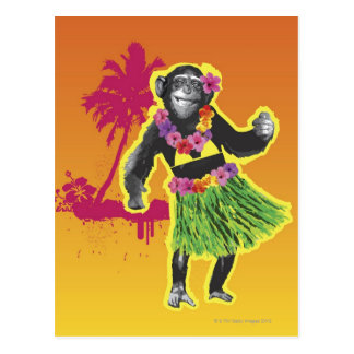 Chimpanzee Hula Dancing Post Cards