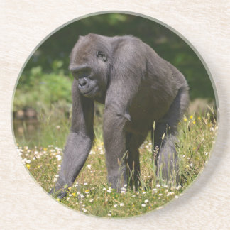 Chimpanzee in the flowering grass coaster
