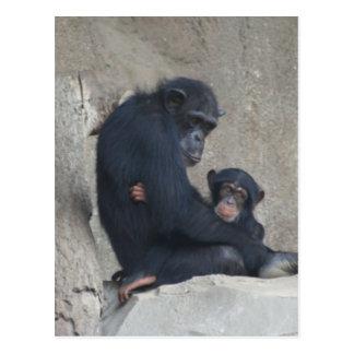 Chimpanzee Mummy and Baby Post Cards