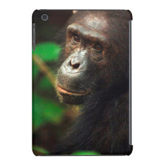 Chimpanzee (Pan troglodytes) Portrait in Forest iPad Mini Retina Case