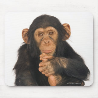 Chimpanzee (Pan troglodytes). Young playfull Mouse Pad