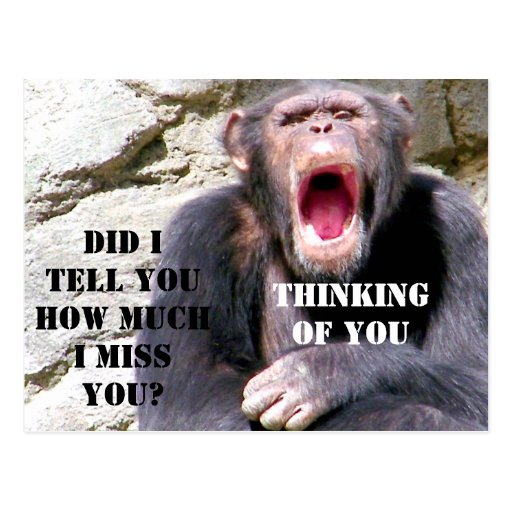 Chimpanzee_ Post Cards
