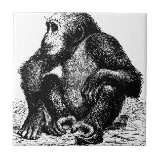 chimpanzee small square tile