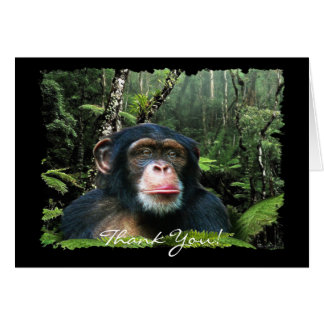 CHIMPANZEE Thank You Card