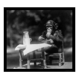 Chimpanzee With a Bottle and Glass at the Zoo 1926 Print