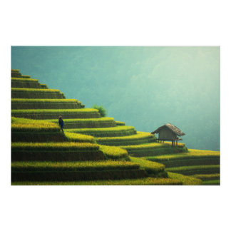 China agriculture rice harvest poster