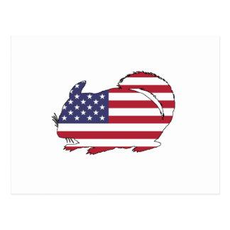 "Chinchilla ""American Flag"" Postcard"