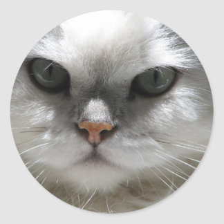 Chinchilla Persian Cat Classic Round Sticker