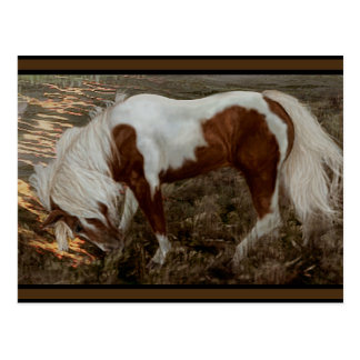 Chincoteague Pony PC Postcard