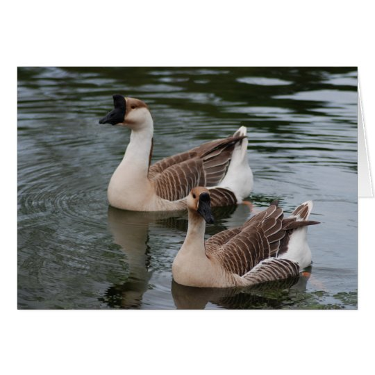 Chinese Brown Geese Greeting Card