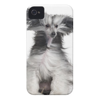 Chinese Crested Dog (15 months old) in the wind Case-Mate iPhone 4 Case