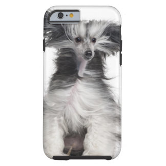 Chinese Crested Dog (15 months old) in the wind Tough iPhone 6 Case