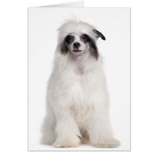 Chinese Crested Dog (7 months old) Card
