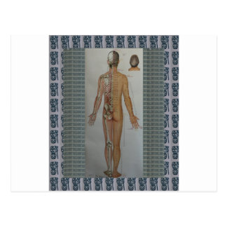 Chinese Doctor Back body acupuncture point map art Postcard