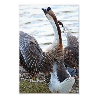 Chinese Goose Art Photo