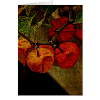 Chinese Lantern Plant With Fruit Card
