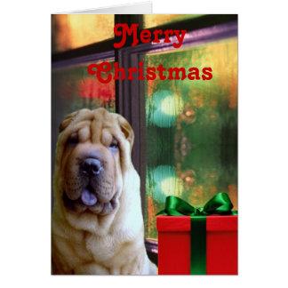 Chinese Shar-pei Christmas Cards