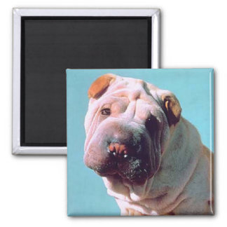 Chinese Shar-Pei Magnet