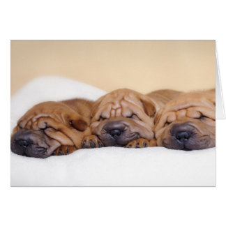 Chinese Shar pei puppies Card