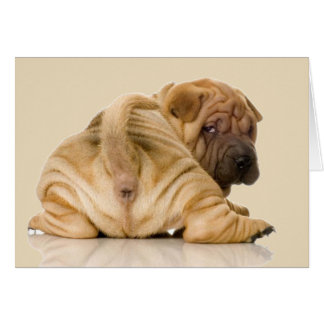 Chinese Shar-pei Puppy Dog Card