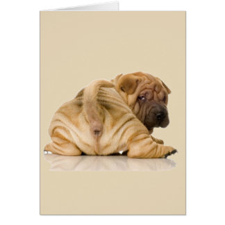 Chinese Shar-pei Puppy Dog Card