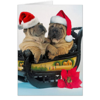 Chinese Shar pei with x-mas hats Card