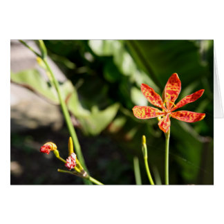 Chinese Tiger Lily Flowers Add Your Greeting Blank Cards