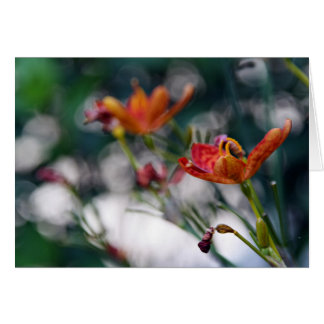 Chinese Tiger Lily Flowers Add Your Greeting Blank Greeting Cards