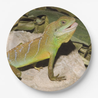 Chinese water dragon for lizard lovers paper plate