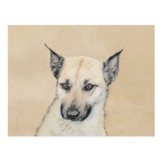 Chinook Puppy (Pointed Ears) Postcard