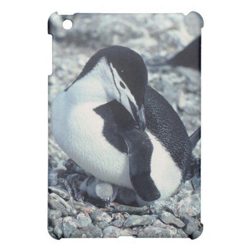 Chinstrap Penguin iPad Mini Cases