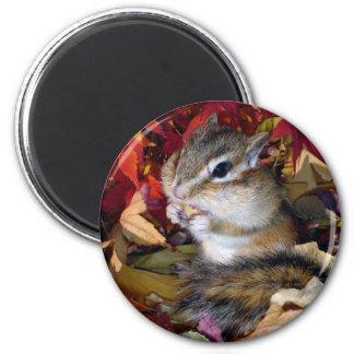 Chipmunk and Autumn (8) photo Magnet