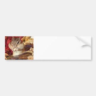 Chipmunk and Autumn (9) photo Bumper Sticker
